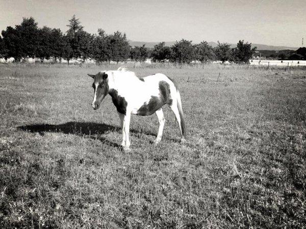 Sucrette est partie au paradis des chevaux ce matin