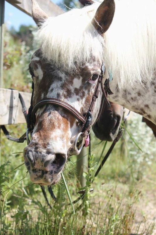Armoise au palais du poney