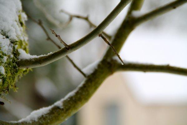 N°7 : SNOWWW