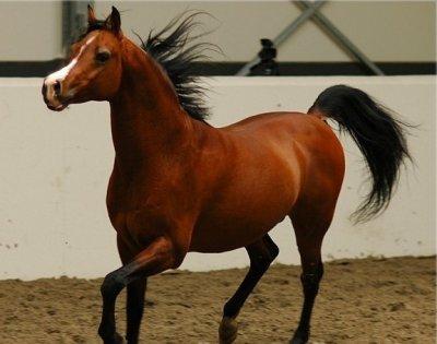 Voici mon cheval: Benghoa <3