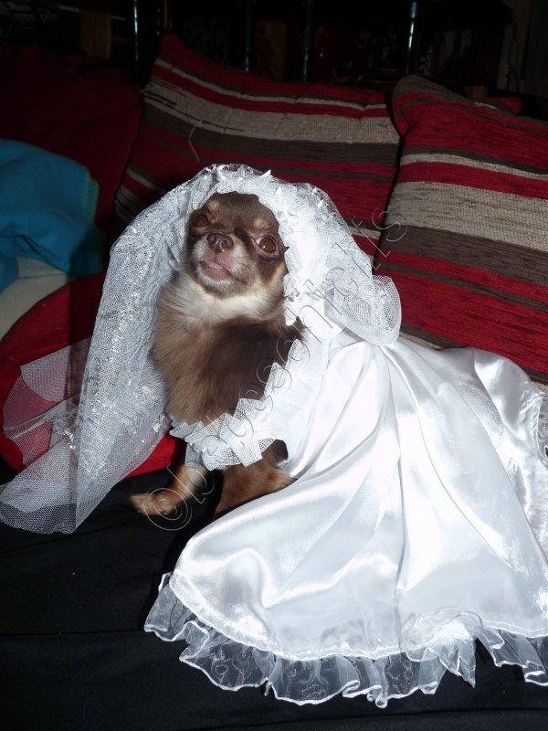 ELFI NE SERA PAS MAMAN ELLE EST TROP PETITE ( la robe est juste pour laphoto)