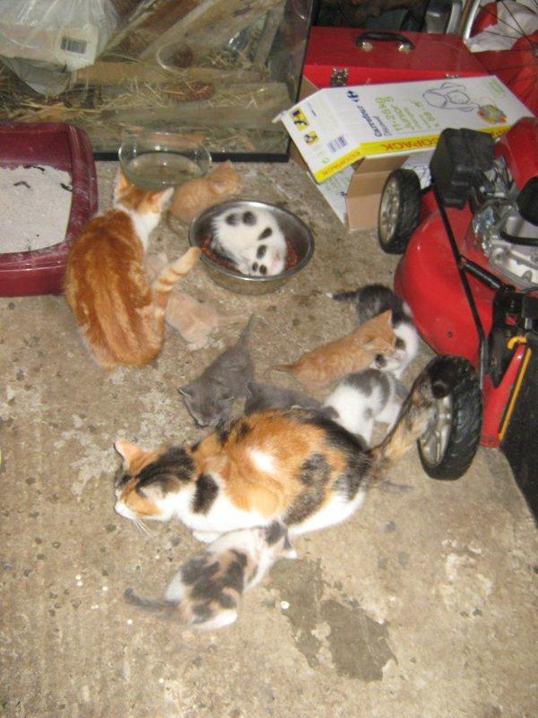 ATTENTION!!! L'invasion des chats a commencer: