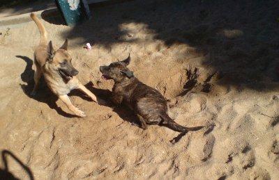 une petite photo des chiens