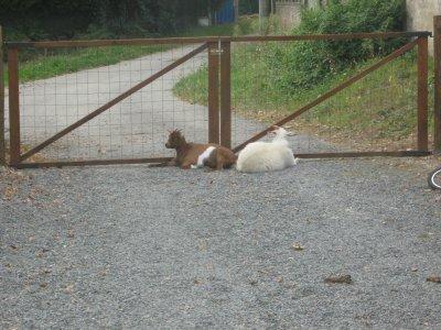 Mes gardiennes, Attention aux chèvres, mdrrrrrr!!!