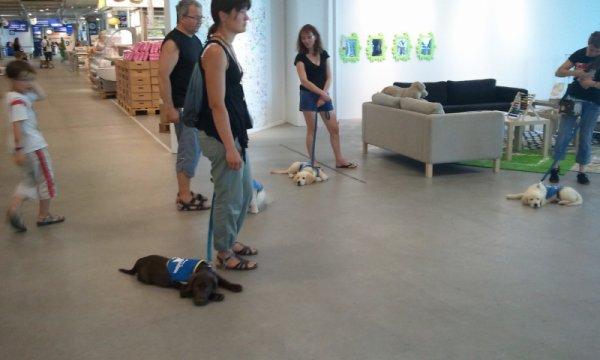 Cours à Ikea