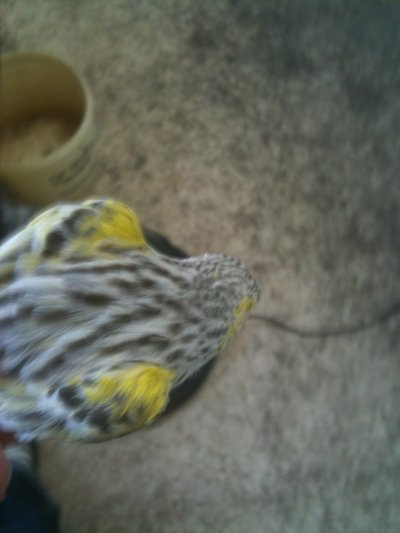 agata topazio giallo mosaico 2010