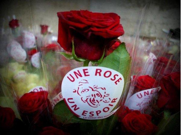 UNE ROSE UN ESPOIR- 2017