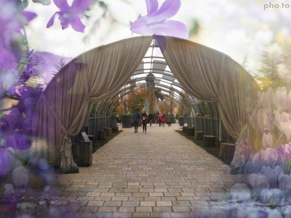 invitation au dépaysement- jardins éphémères 2017