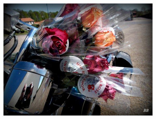 une rose un espoir- 1998, comment tout a commencé