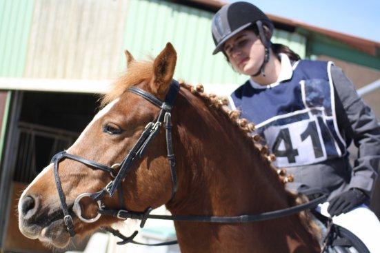 Prince de Beaune, mon merveilleux poney ♥.