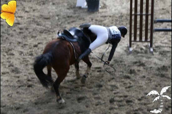 Concours 2011 ♥