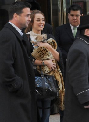 miley cyrus  quittant son hôtel à new york city le 2 mars 2011 en compagnie de son chien
