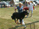 Photo de beauceronspassion