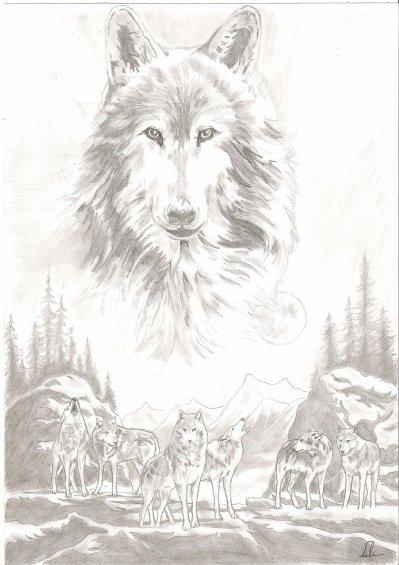 Loups Blog De Dessin Lili04