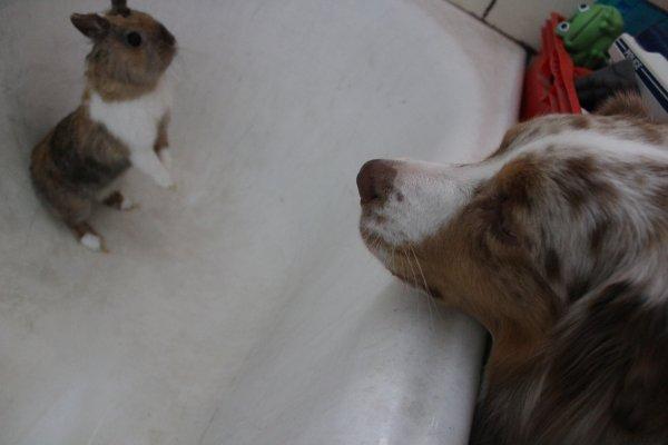 nos amis les bêtes juillet 2015