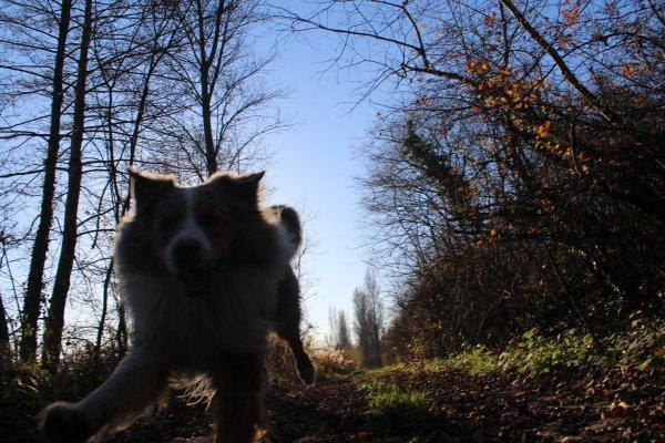nos amis les bêtes novembre 2016