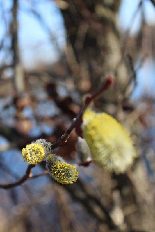 le printemps arrive mars 2017