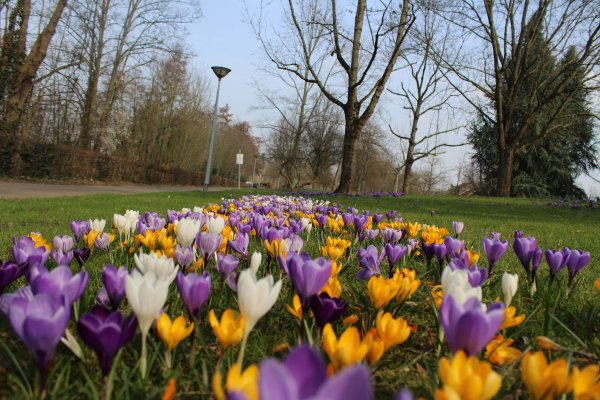 vive le printemps