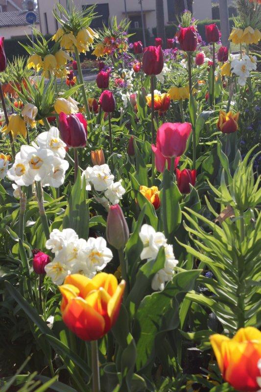 les fleurs du printemps avril 2017