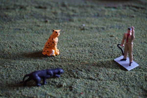 La panthère noire et le guépard :