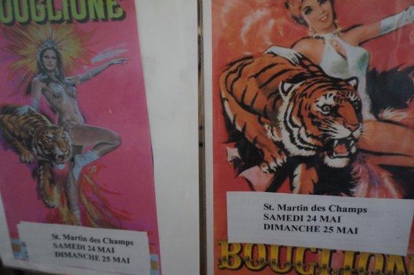 Chticircus à Saint Martin des Champs(29) :
