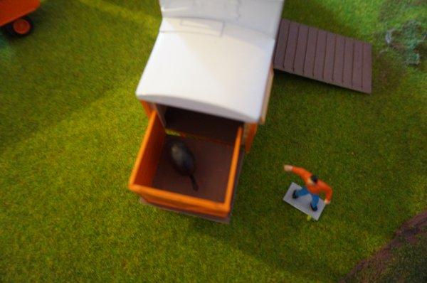 Sophie partage son logement avec un casoar.