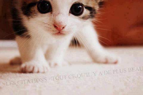 Citations ♥ 02 ♥