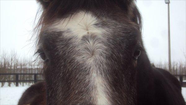 Si vous voulez qu'il vous aime , ayez au moins la politesse de ne pas charger vos problème sur son dos. On ne peut pas tricher avec un cheval. Des éperons ? Vous avez l'intention d'etre plus fort que lui ? Un cheval qui veut vous virer vous vire, éperons ou pas. Ca fait 10 000 ans que les humains tentent de dresser les chevaux, 10 000 ans qu'on tombe, 10 000 ans qu'on se relève, qu'on invente les voitures, qu'on invente les avions et que pourtant on continu de monter à cheval, vous savez pourquoi ? Le pas espagnol , tango du cheval. Vous aviez le temps de le monter mais vous n'avez pas le temps de le marcher ? Vous aviez le temps d'enseigner mais vous n'avez pas le temps de dresser ? On ne renonce jamais aux chevaux, jamais. De toutes facon les chevaux ont le meme problème que les hommes, ils meurent. Pied à terre, carresser, feliciter. Se contenter de peu et jouir. Ce n'es pas le but qui compte, c'est le chemin. Deux étalons Face à Face. Un cheval se sert de tout ce qu'il a appris. Repartir à zero, tout lui réapprendre. C'est à lui de faire le premier pas dès qu'il vous regarde felicitez. Il faut descendre de cheval pour apprendre à remonter. C'est ca le sentiment Equestre et ce n'est rien d'autre que de l'Amour. Savez vous pourquoi on ne renonce jamais ?