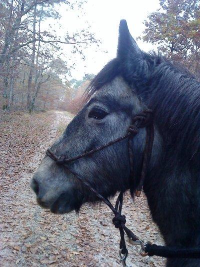 La faiblesse d'un cavalier, c'est son cheval.