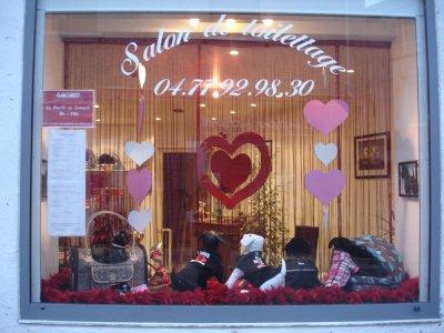 la vitrine sp ciale saint valentin salon de toilettage canimod. Black Bedroom Furniture Sets. Home Design Ideas