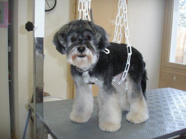 """AHPY la Terrier Tibétain en mode """"pattes d'eph' """"!!!"""