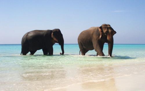 Tout pour ne pas s'ennuyer à la plage !