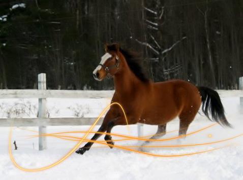 La course & L'équitation.