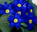 Photo de macro-blue