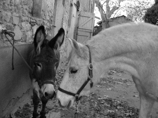 Fanny & Sultan