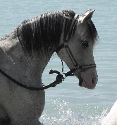 Séjour exceptionnel - Touareg à l'étang