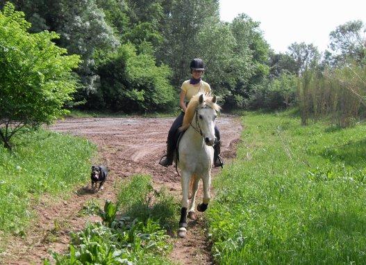 [22-04-09] [ Faire en sorte que les membres du cheval soient le pronlogement de ses propres jambes, sentir ses pieds fouler le sol, regarder ensemble dans la même direction, c'est ça la fusion cavalier/cheval ]