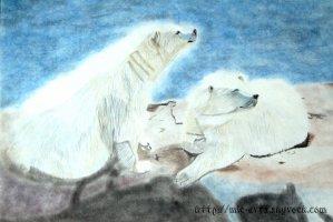Des ours polaires sur la banquise