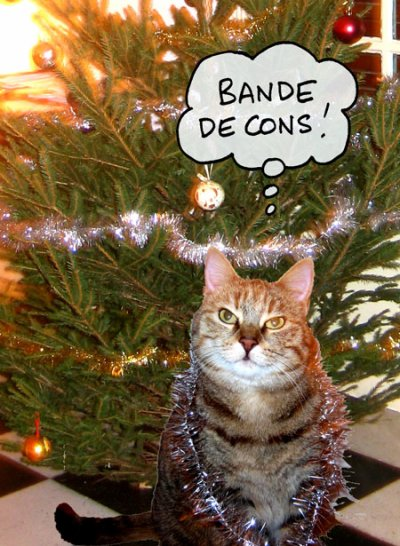 Trop marrant le chat blog de cloclodu59320 - Photo chat marrant ...