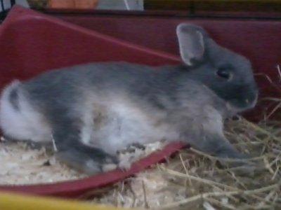 Ma Petite Lola (L) :$