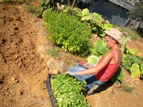 """""""Cultivons notre jardin"""""""