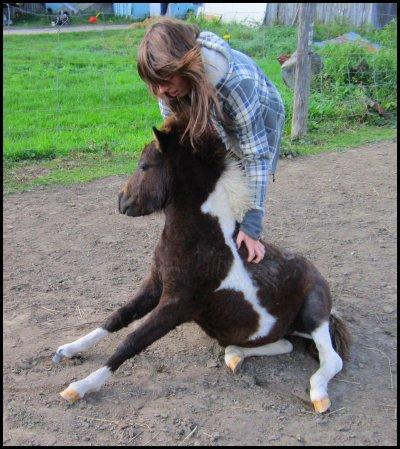 Mes chevaux !