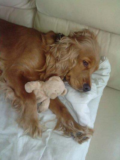 mon amour de chien