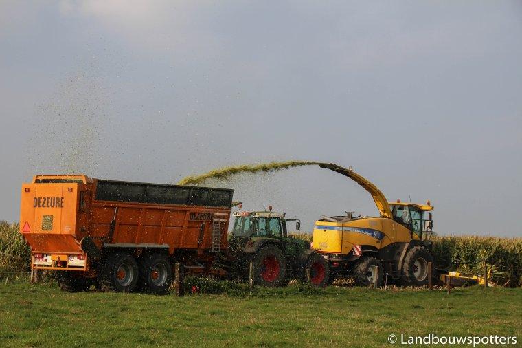 Mais hakselen 2015 met Vergauwe uit Westrozebeke