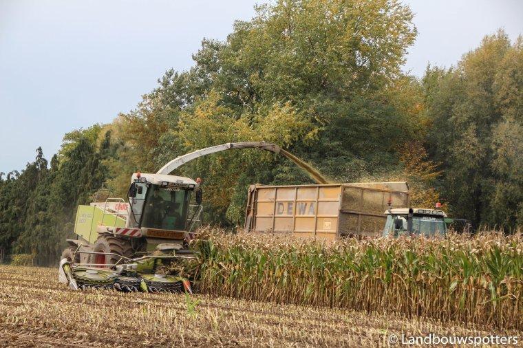 Mais hakselen 2015 met Peltijn uit Hansbeke