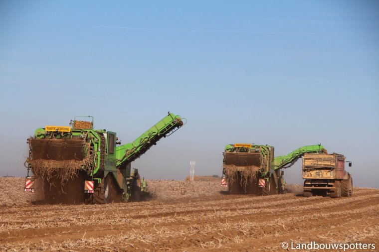 Arrachage de pomme de terre 2016 - Delputte - 2x AVR PUMA 3