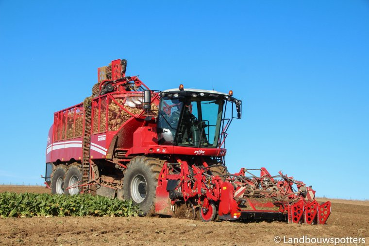Grimme Rexor 630 - Arrachage de betteraves