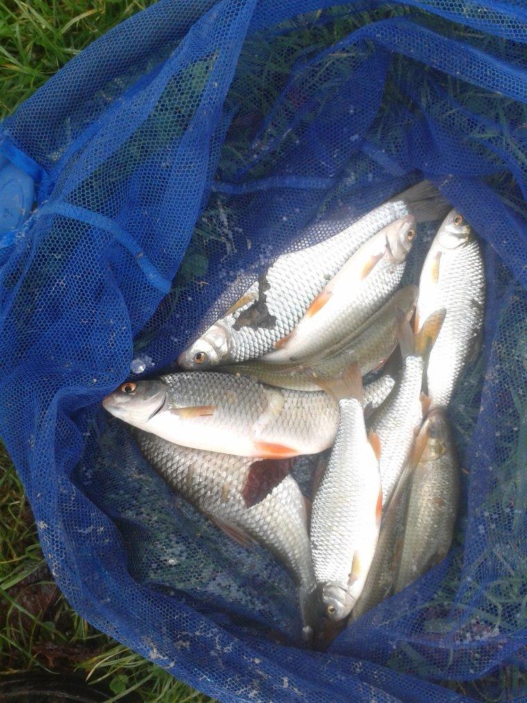 Un exemple d'une pêche en novembre 2015