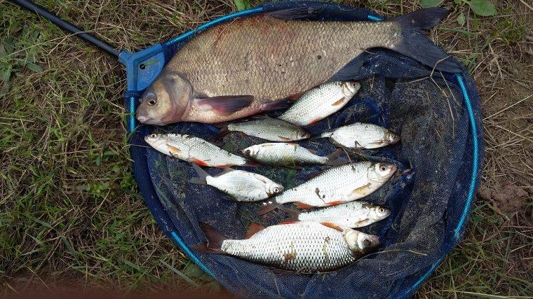Pêche en bras de Seine Nord des Yvelines (78) le 23 septembre 2016