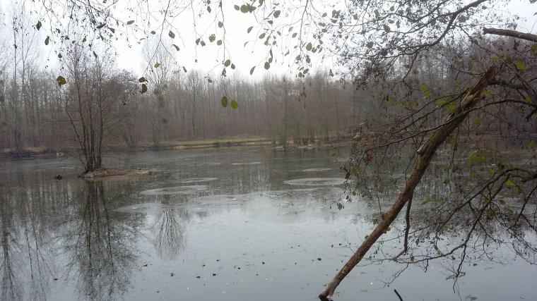 Sortie au leurre ce matin 2 12 2016 étang des 3 sources (95)